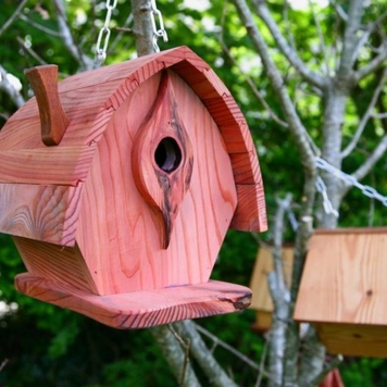 Bird House Course