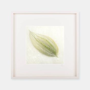 'Leaf'