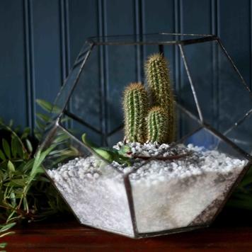 Large Dodecahedron Terrarium