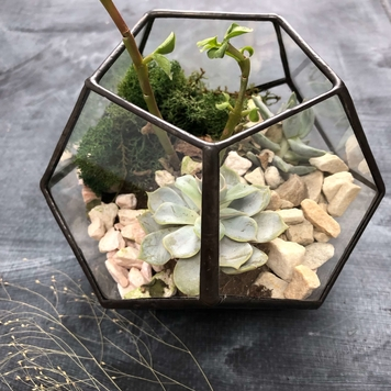 Small Dodecahedron Terrarium