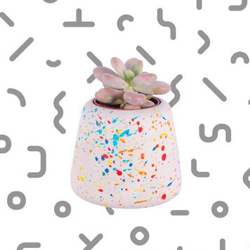 Large Sprinkles Planter