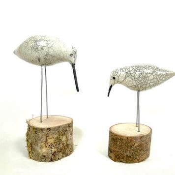 Curlews