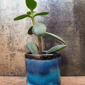 Blue Cacti & Succulent pot